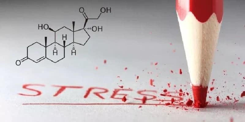 hormon kortisol